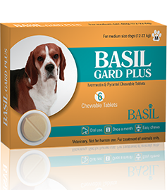 basil-dog-medium-front